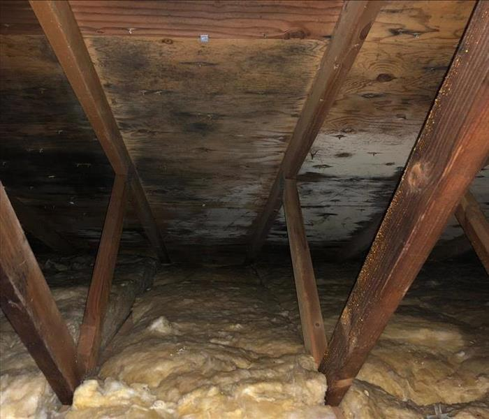 Mold Remediation Attic mold in Kelseyville due to poor circulation